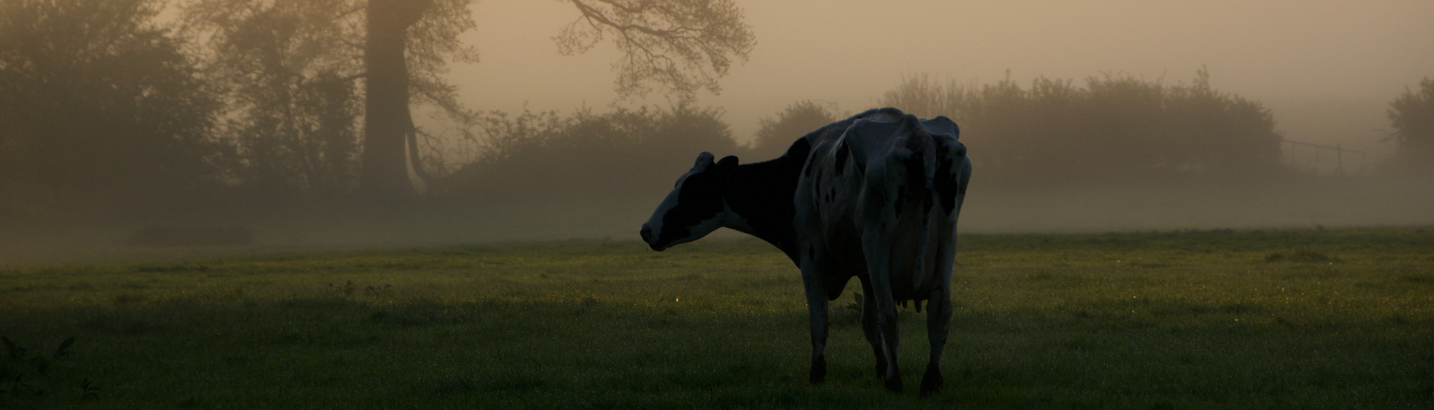 Agricultural Animal